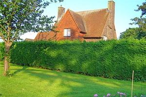 Вечнозеленые кустарники для живой изгороди
