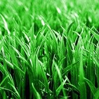 Трава для газона