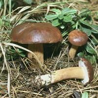 Где собирать грибы